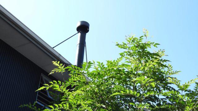観葉植物 シマトネリコのイメージ