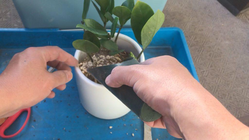 観葉植物の植替え
